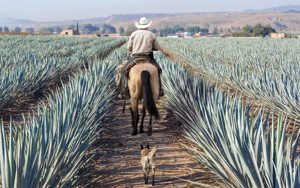 Cheval au Mexique