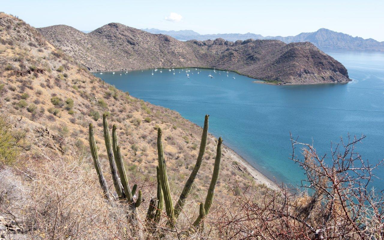 Paysage de la basse Californie au Mexique
