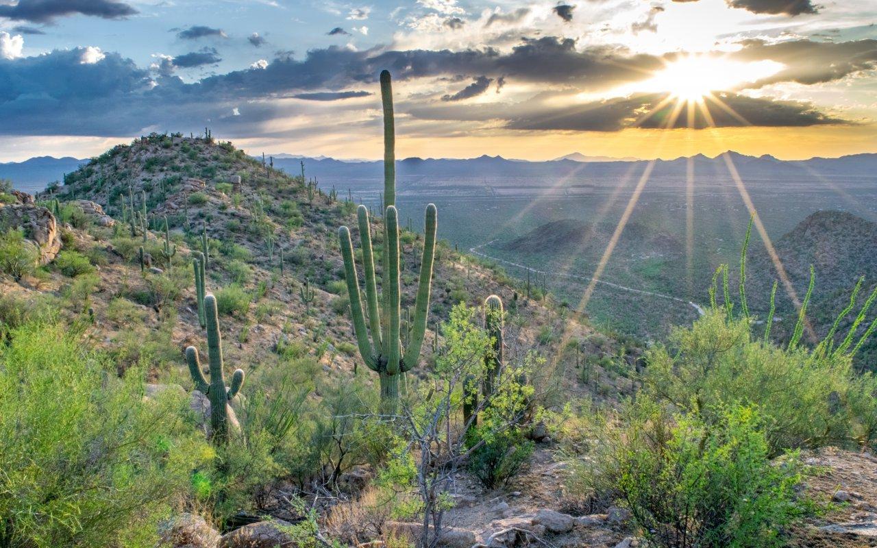 Desert de Tanora au Mexique